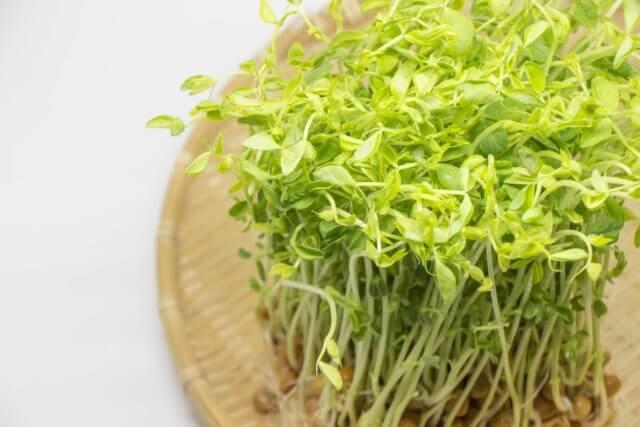 豆苗の栄養素