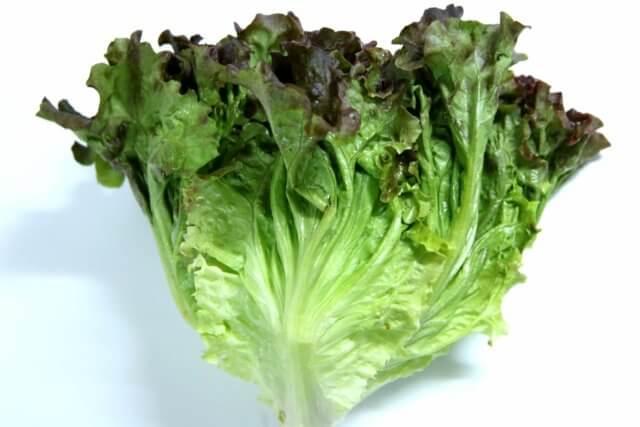 サニーレタスの栄養素