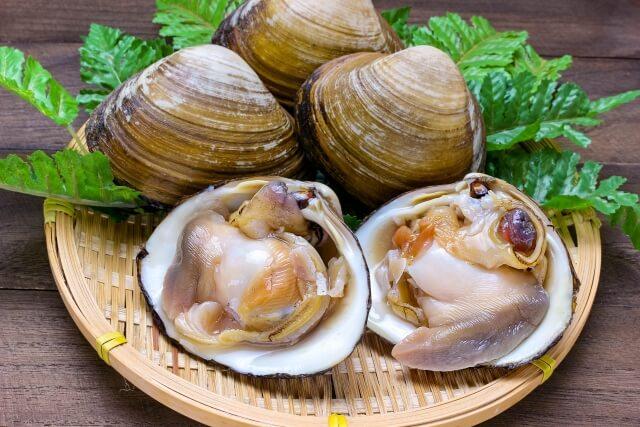 ホッキ貝の栄養素